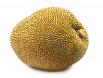 7413616-giant-jackfruit-of-indian-subcontinent